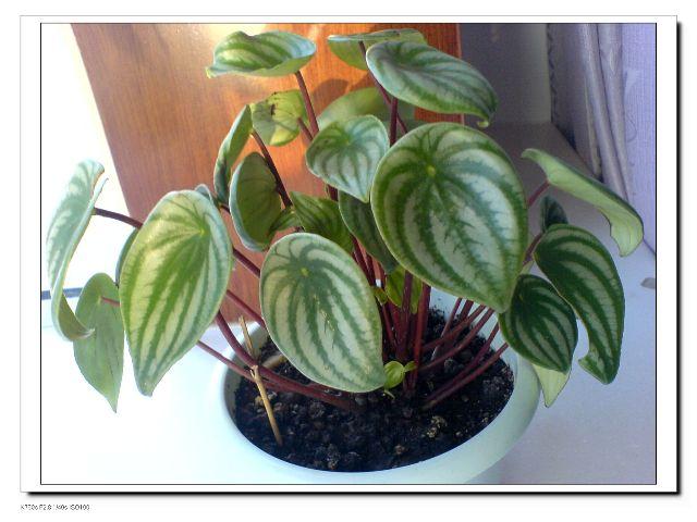 适宜新居室的观赏植物