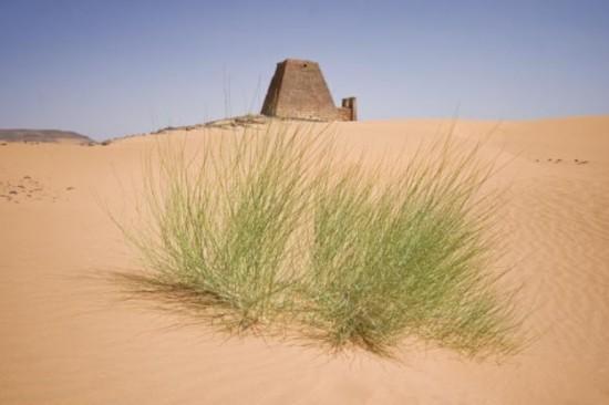 沙漠中的绿草