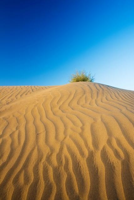 沙漠中的小灌木
