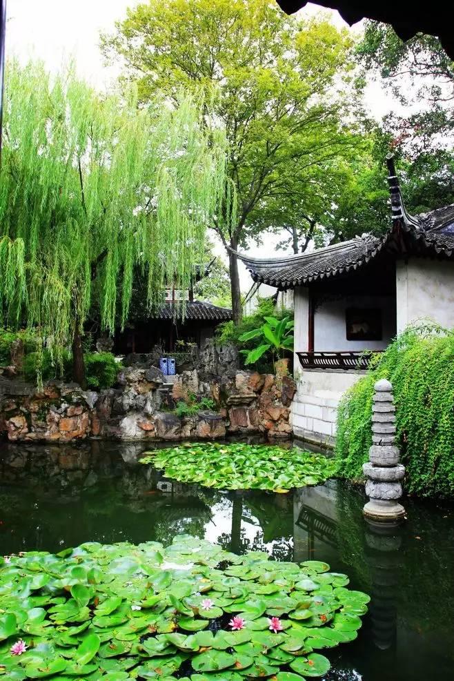 古典园林中常见的植物,你认识几种?