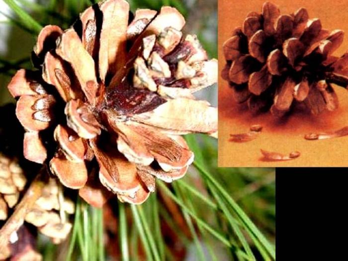 种子植物和孢子植物