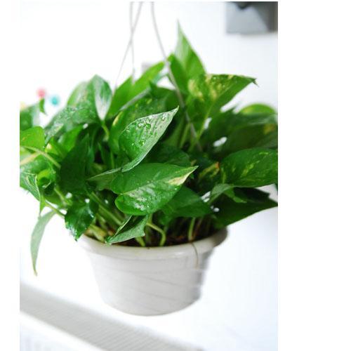 植物与人类健康