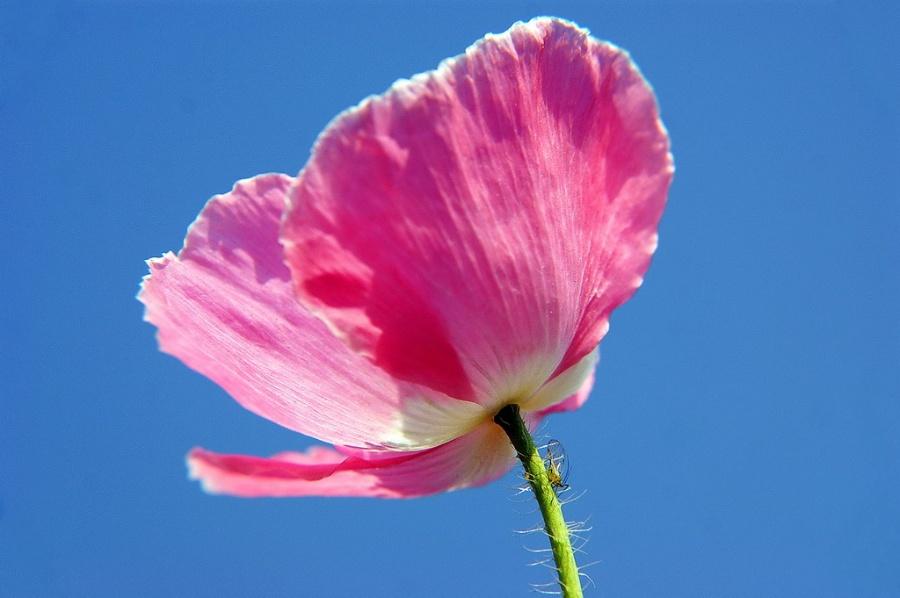 浅粉色风景壁纸 高清